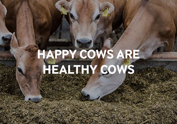 A happy cow produces more better quality milk.
