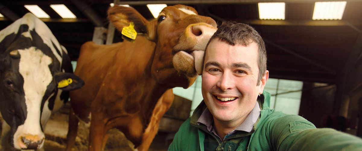 Cow licking a happy smiling farmer