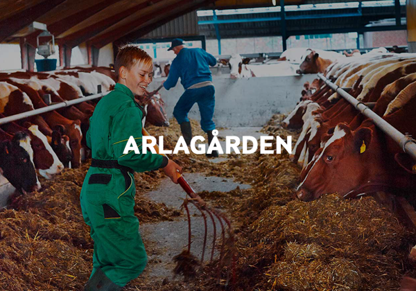 Read about our farm assurance programme - Arlagården.