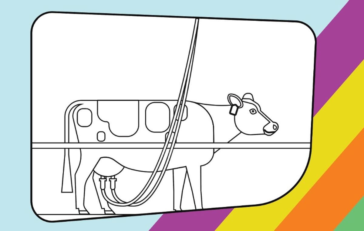 illustration of a cow being milked to be coloured in