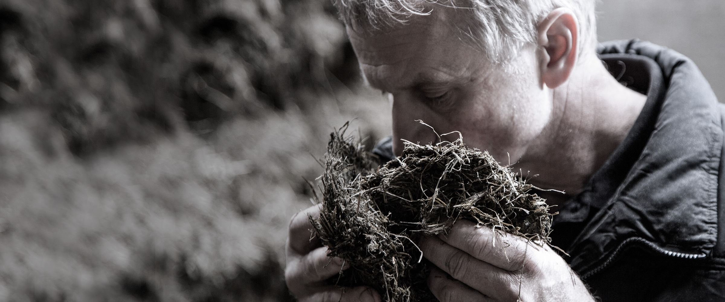 A farmer smelling clumps of hay