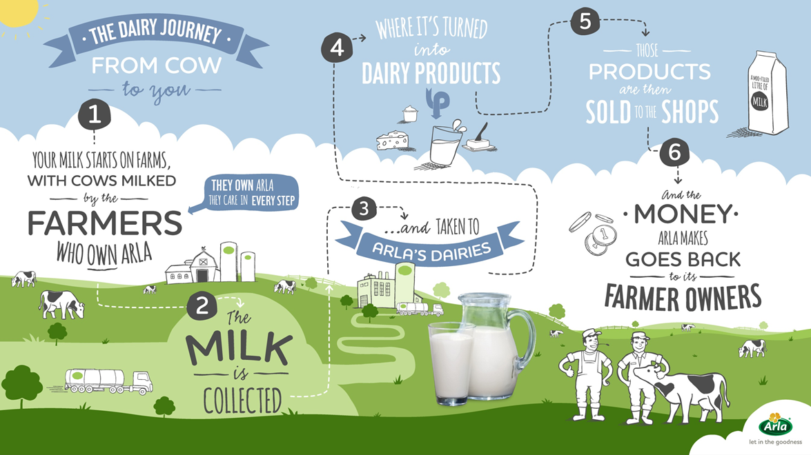 The Dairy Journey from cow to you infographic