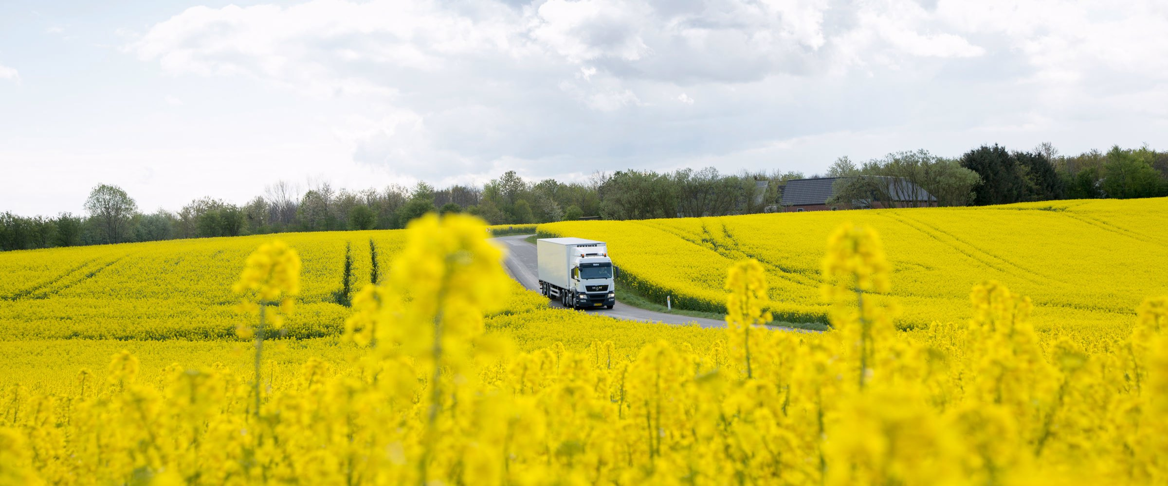A truck driving through fields of yellow flowers