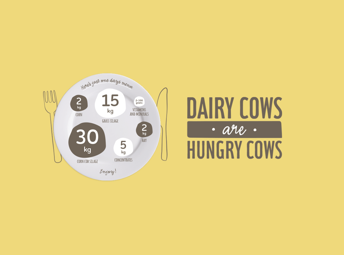 Dairy cows are hungry cows infographic