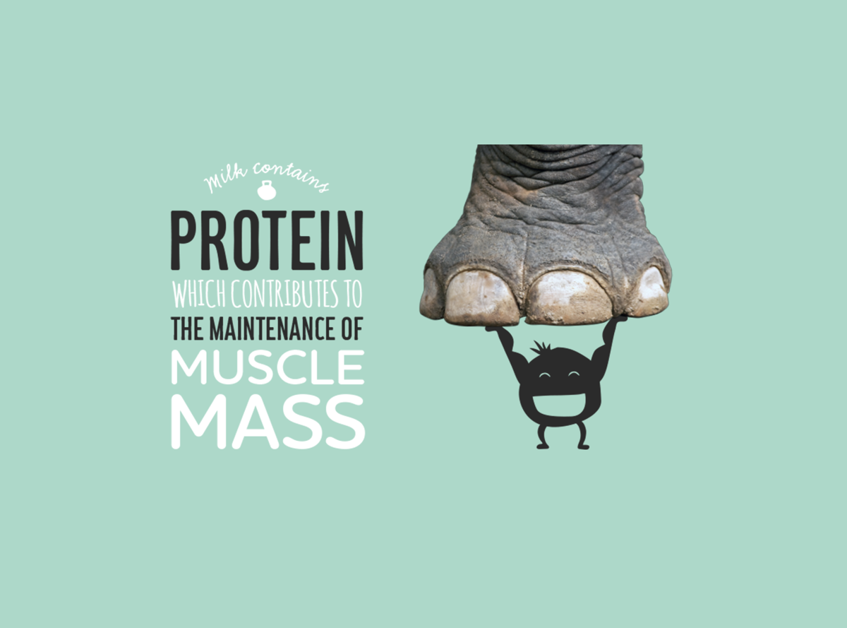 Milk contains protein which contributes to the maintenance of muscle mass