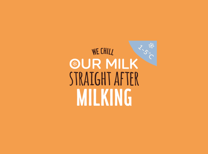 We chill our milk straight after milking. 1-5°C